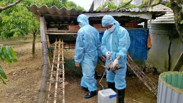 Biện pháp phòng bệnh cho gia súc, gia cầm trong mùa mưa bão