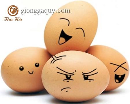 Cách kiểm tra độ tuổi của từng quả trứng gà