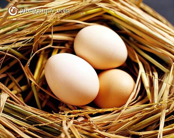 Phương pháp nâng cao sản lượng trứng cho gà đẻ