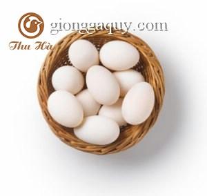 kỹ thuật ấp trứng ngan hiệu quả