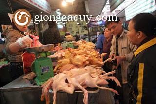 Mở cửa cho gà Trung Quốc tràn vào: Mối lo thịt 'rác'