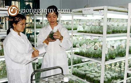 Nguồn gen vật nuôi bản địa Việt Nam: Tập đoàn gà