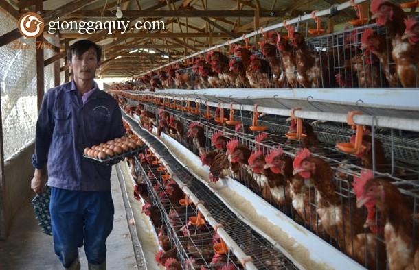 Những điều cần biết về xây dựng mô hình trang trại khép kín