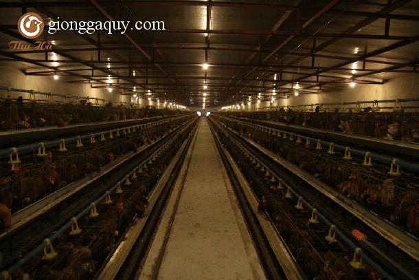 Mô hình trang trại nuôi gà hoàn toàn tự động